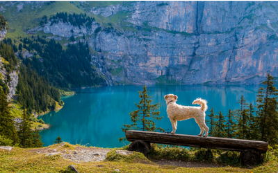image for Summer Road Trips With YourPet
